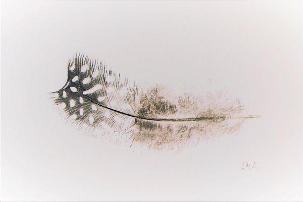 guinea fowl feather - giclee print