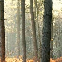 Glistening Woods