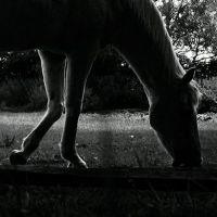 Kenilworth Horse