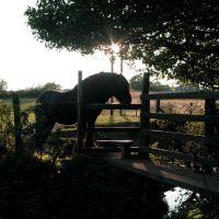 Public Horse Path