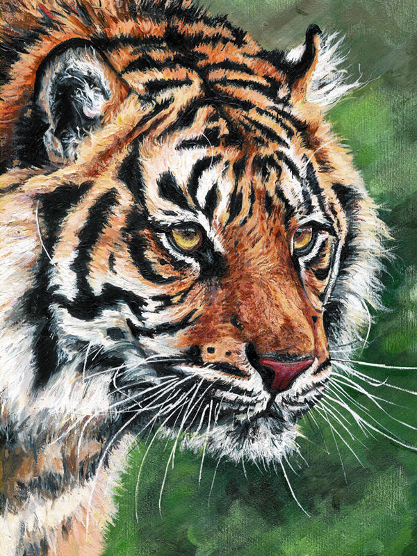 'Tiger Tiger'