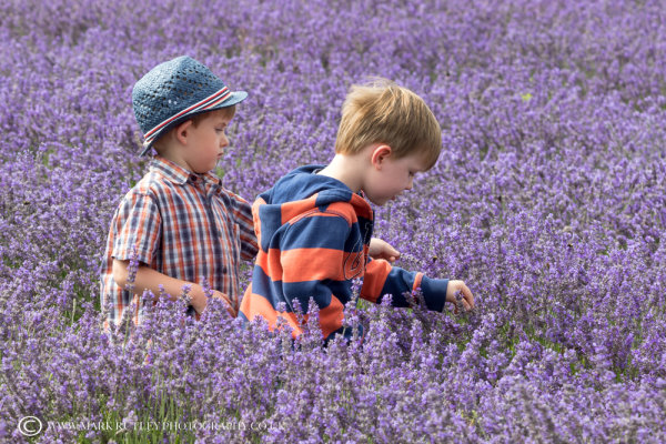 LADS IN LAVENDER