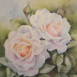 White Roses, by Hazel Brown