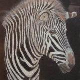 Zebra, by Olivia Davies