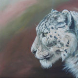 Snow Leopard, by Charmian Hayes
