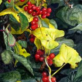 Hedgerow, by Jim Coggins