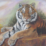 Resting Tiger, by Charmian Hayes