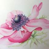 Sun-Kissed Anemone, by Hazel Wakeman
