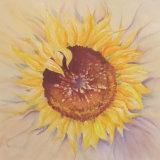 Hazel Wakeman, Sunflower Sunburst