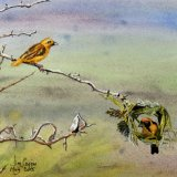 Weaver Bird, by Jim Coggins
