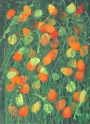 Physalis Giclee print Limited Edition 1 to 50 2014 71 x 56cm unframed