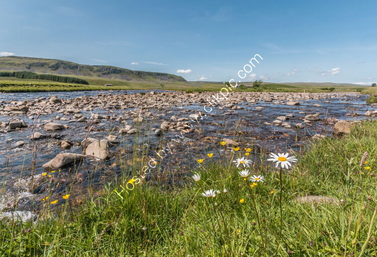Harwood Beck meets the River Tees