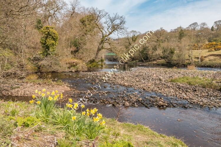 The confluence of the rivers Balder and Tees at Cotherstone