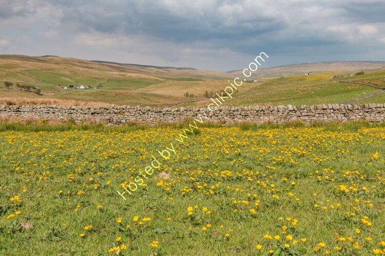 Harwood Spring Meadow