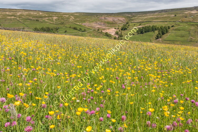 Hay Meadow at Club Gill