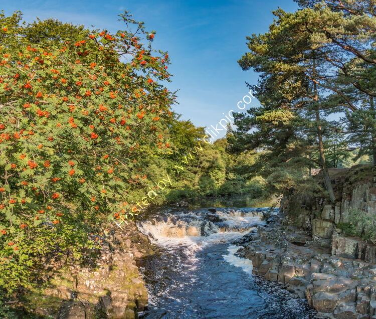Rowan Tree at Low Force