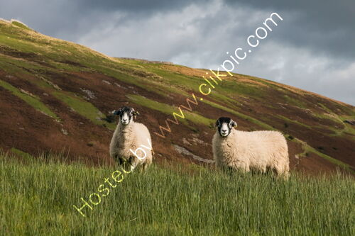 Swaledales and Kisdon Hill
