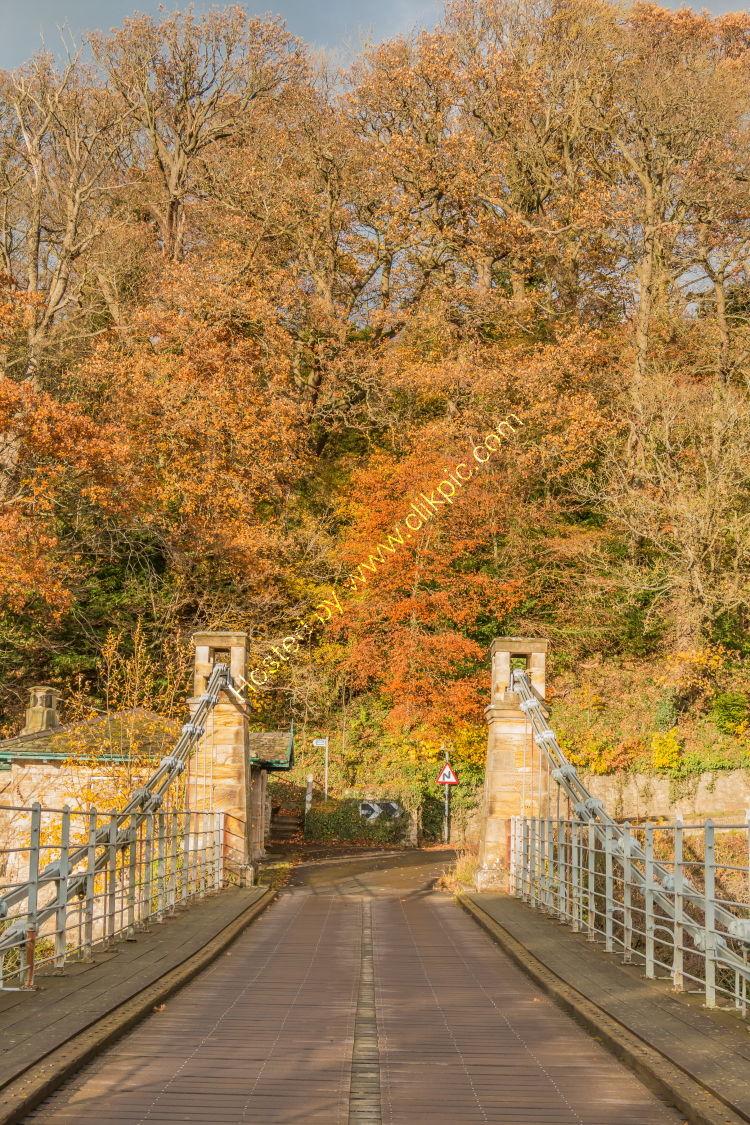Across Whorlton Bridge in autumn
