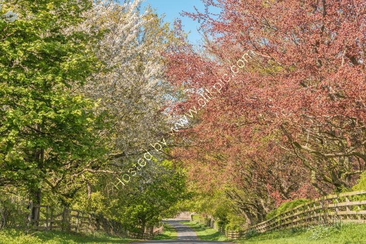 Road into Spring