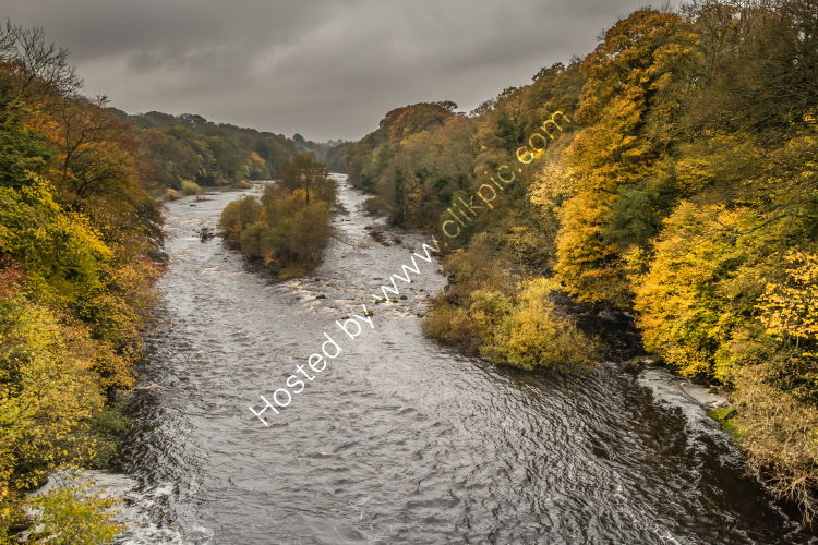 Autumn on the River Tees at Winston