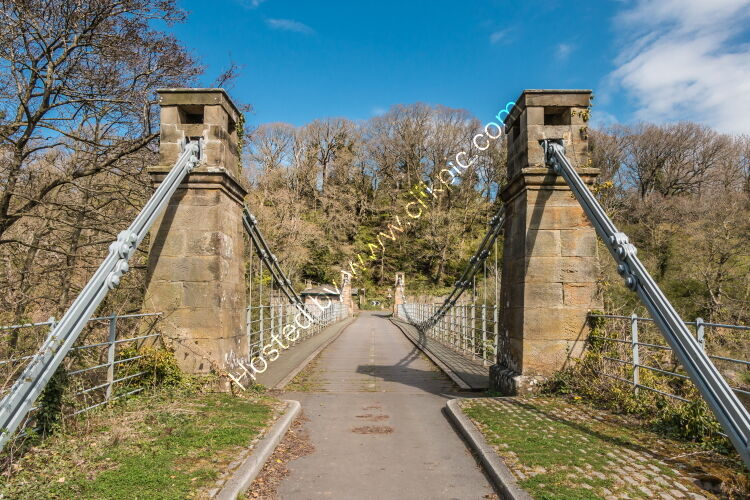 Whorlton Suspension Bridge in Spring