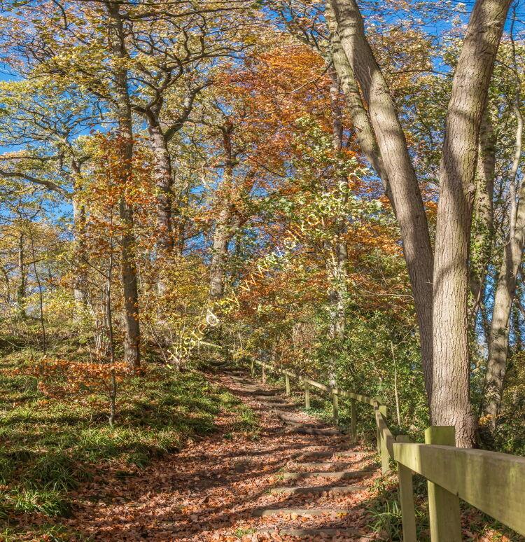 Stairway Through The Woods (Autumn)
