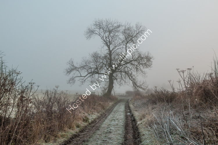 Park Lane Ash Tree on a Frosty and Foggy Morning