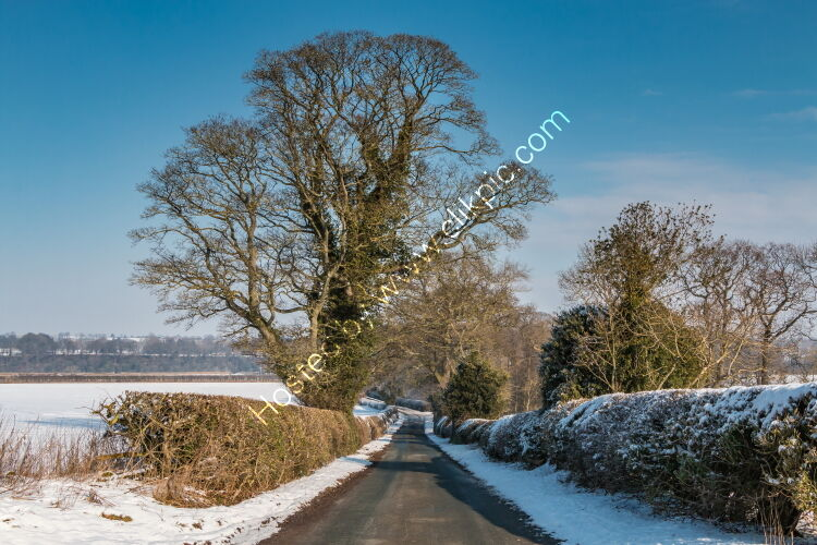 Thorpe Sycamore in Snow