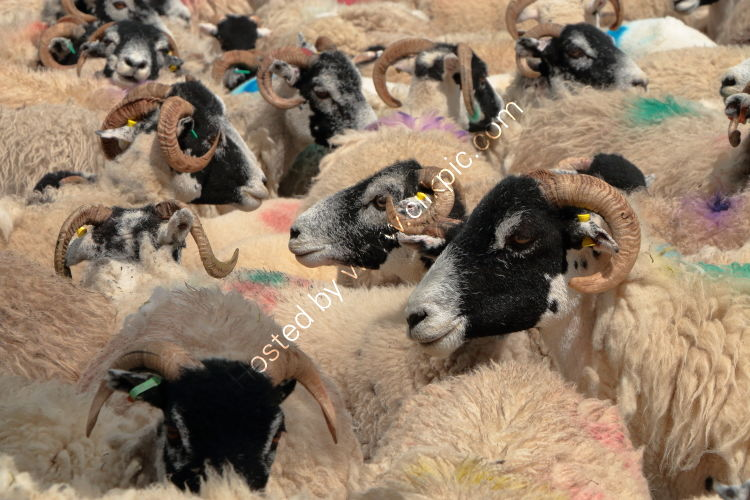 A Spectrum of Swaledales