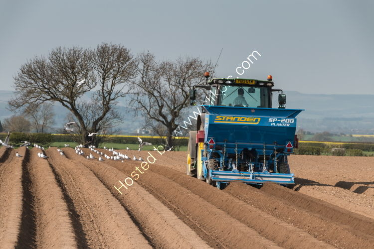 Sowing the Potato Crop 2019 (1)