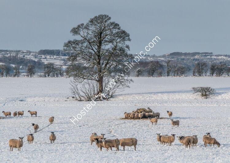 Winter at Hutton Hall Farm