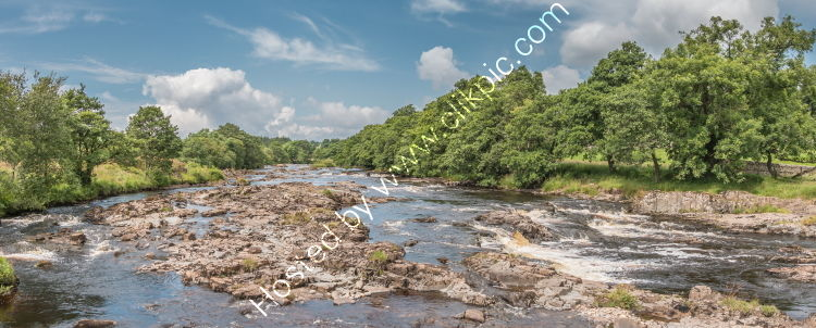 River Tees near Low Force Summer Panorama
