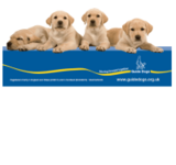 guide dogs display