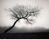 The Tree XVIII