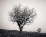 The Tree XXVI