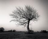 The Tree XXXVI