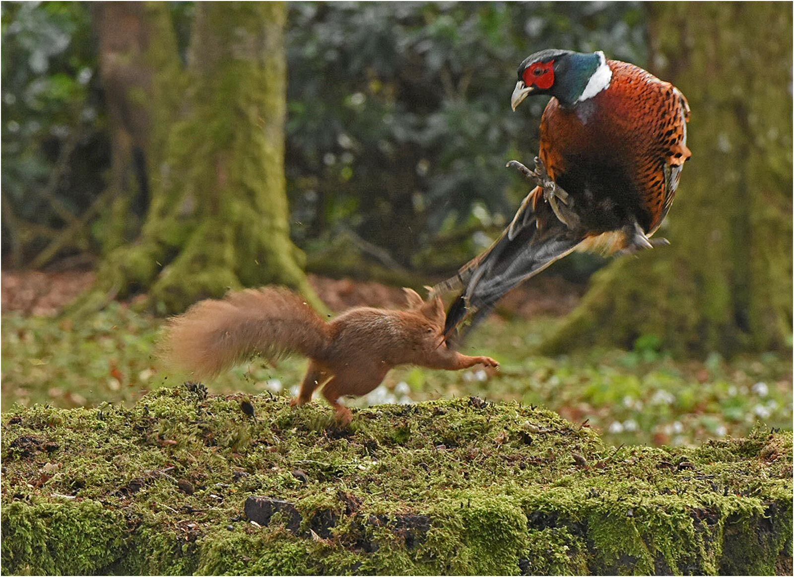 Attack Squirrel !