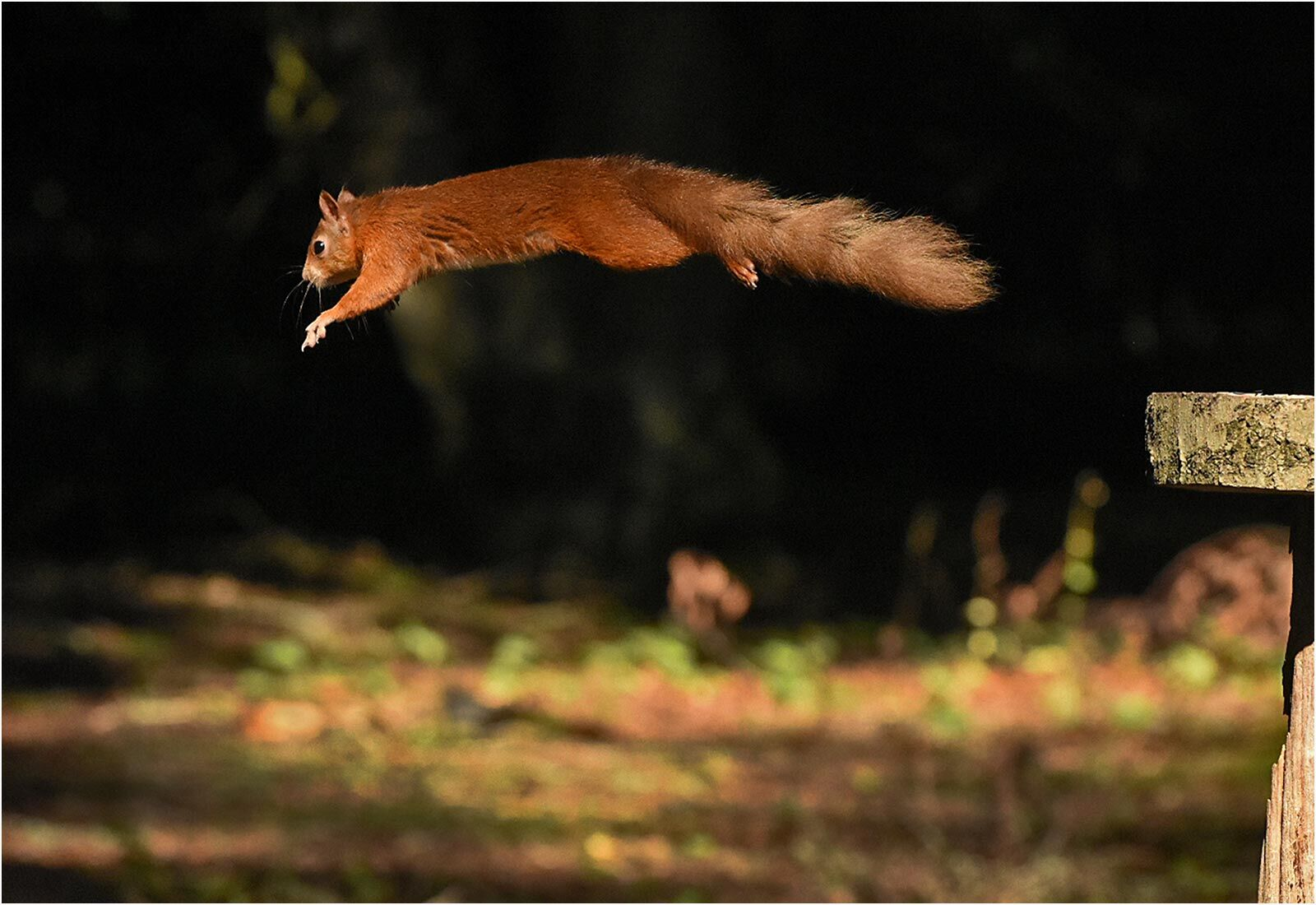 Red, Mid-jump