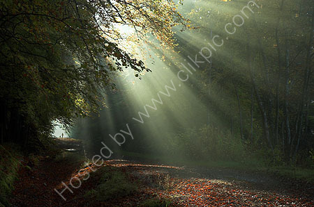 Light Shafts