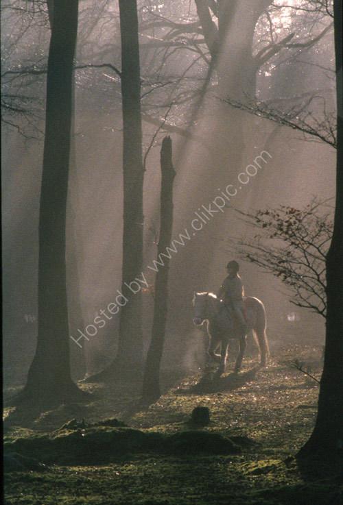 In Caddam Wood
