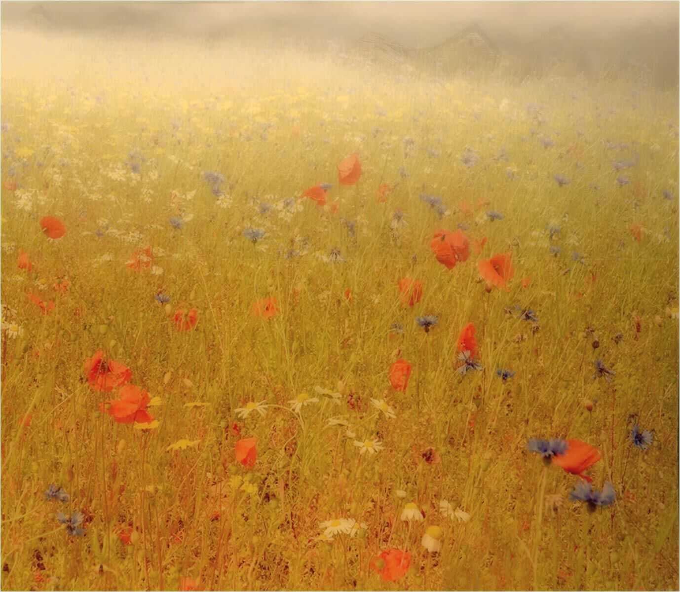A Misty Monet Morning