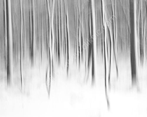 Snow/trees Abstract