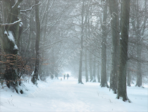 Winter Walk, Caddam Wood
