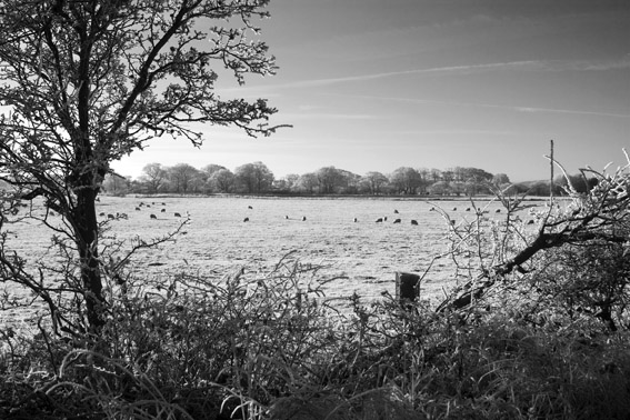 Cold and Frosty Field