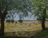 Bales between the Trees - Greetings card