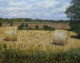 Hay Bales at Crow Hill