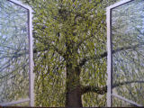 Triptych -The Tree Across the Road - Spring