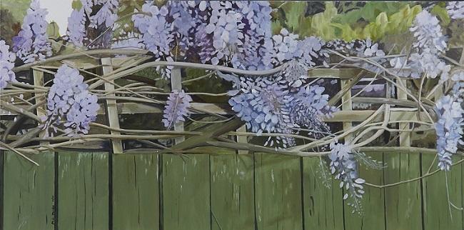 Wisteria on fence #2