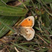 Small Heath (4)