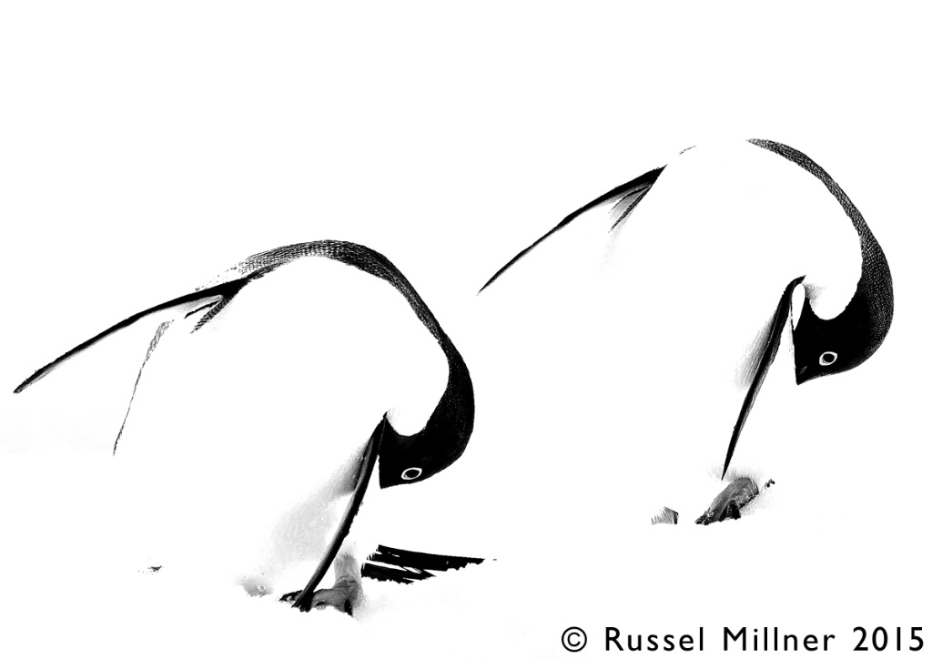 Abstract Penguins